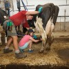 Visiting the Eagan Dairy Farm