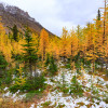 Larch Valley in Banff National Park