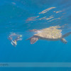 Snorkelling Turtle Town with Seafire Charters